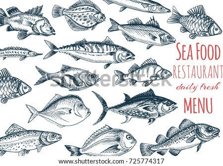 Vector illustration sketch - fish menu restaurant. Card menu seafood. vintage design template, banner.