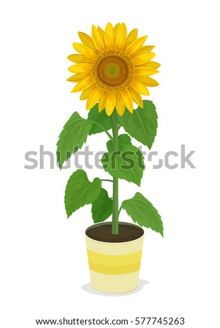 vector illustration  sunflower...