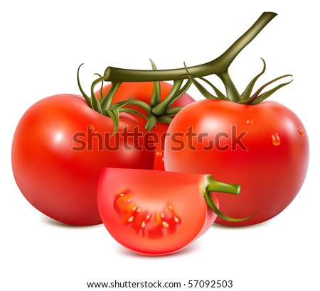 Vector illustration. Tomatoes with water drops. - stock vector