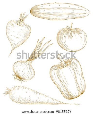 Vector illustration vegetables in vintage engraving style.