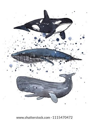 Vector illustration. Whales set. Ocean life. Deep sea animals.