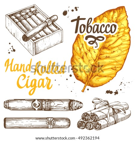 Vector illustration with classical smoking set. Bunch of tobacco and box with hand rolled cigars, leaf in sketch style. Best cuban quality.