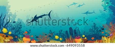 vector illustration with coral