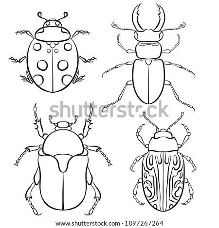 Vector illustration with insect beetles. Set in line art style isolated on white background. Ladybird, beetle deer, green beetle, calligrapha serpentina. Coloring book page Foto stock ©