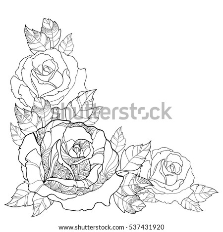 Vector illustration with outline rose flower and foliage isolated on white background. Floral elements with roses and leaves in contour style for summer design and coloring book. Corner composition