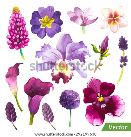 Vector illustration with watercolor flowers. Painting violet set of plants with calla lily, plumeria, orchid and leaves.