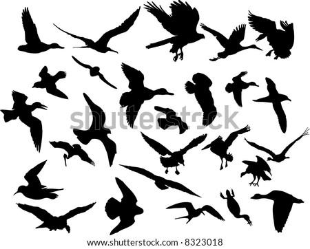 illustrations of birds. Vector illustrations black