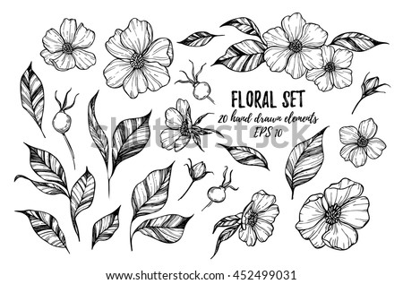 vector illustrations   floral