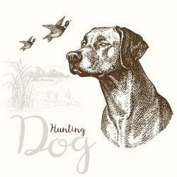 Vector illustrations of hunting dog