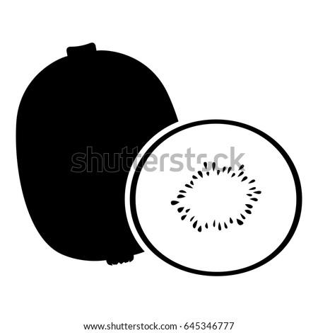 vector illustrations of kiwi
