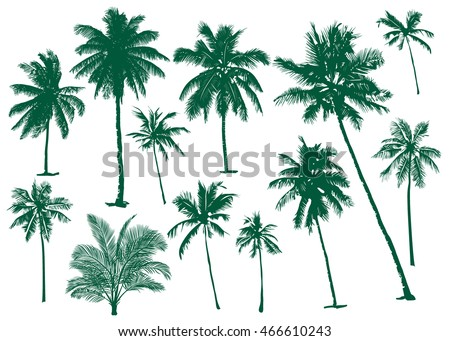 Vector illustrations Set realistic black silhouettes isolated tropical palm trees on a white background