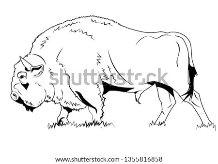 Vector image of a bison