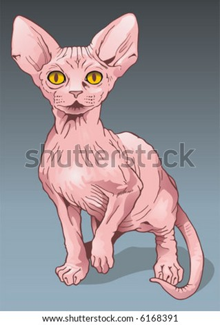 vector image of a cat   breed