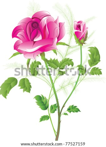 Vector image of a flowering pink rose with a bud