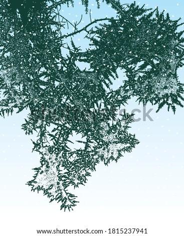 vector image of a frozen fir