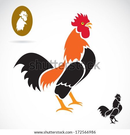 vector image of an cock on