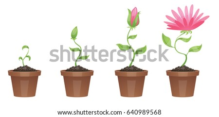 vector image of four stages of