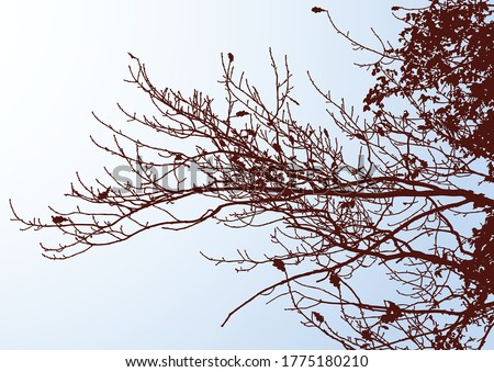 vector image of silhouettes oak