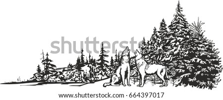 vector image of two wolves