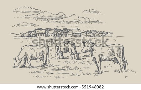 vector image of village and