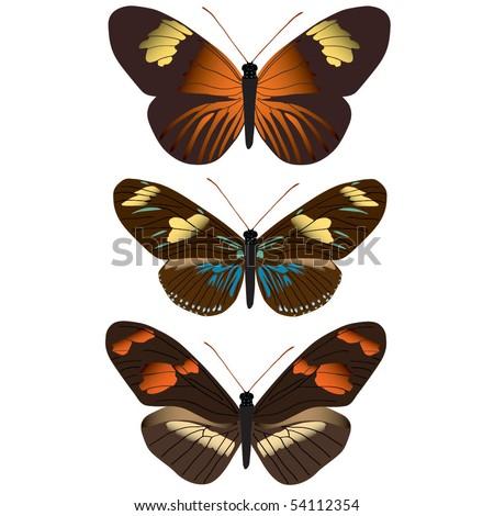 stock-vector-vector-images-of-assorted-butterflies-54112354.jpg