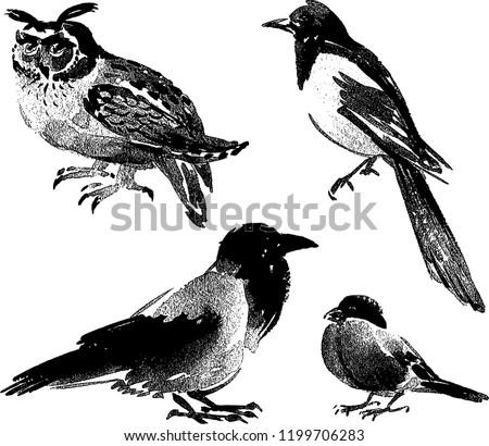 Vector images of different wild birds