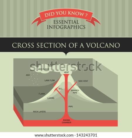 vector infographic   cross