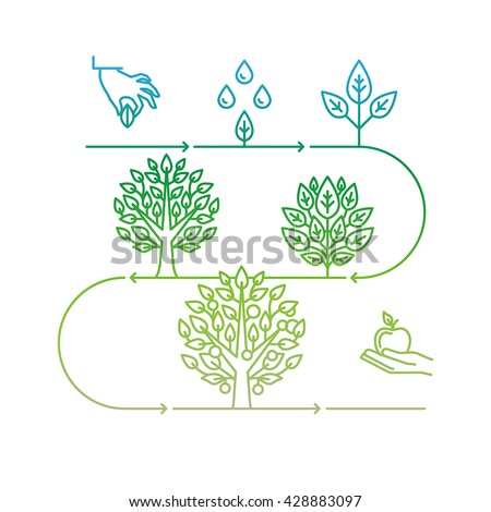 Vector infographics design elements and icons in linear style - business development and growth concepts - growing plant from seed to tree and apple fruit