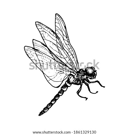 vector ink drawing dragonfly