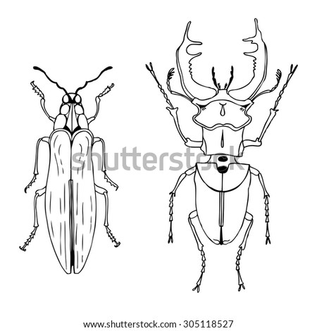 vector ink drawn beetles set