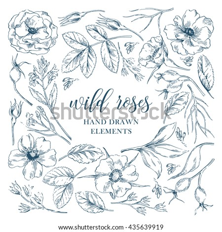 vector ink graphic wild rose