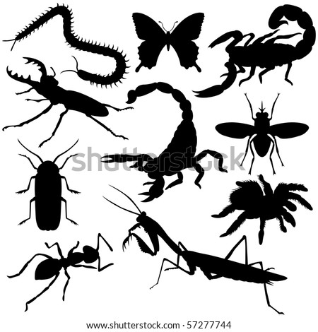 Vector insects silhouettes on white background.