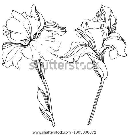 Vector Iris floral botanical flower. Wild spring leaf wildflower isolated. Black and white engraved ink art. Isolated irises illustration element. Foto stock ©