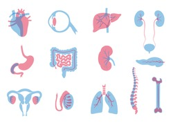 Vector isolated illustration of human organs for transplantation. Stomach, liver, bone, intestine, bladder, lung, testicle, uterus, spine, eye, pancreas icon. Internal donor organ. Medical poster