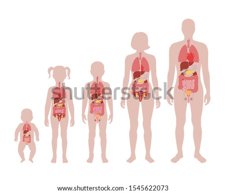 Vector isolated illustration of internal organs in baby, girl, boy, adult man and woman body. Stomach, liver, intestine, bladder, lung, testicle, uterus, pancreas, kidney, heart, bladder icon.