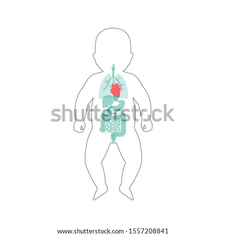 Vector isolated illustration of newborn child internal organs of baby. Stomach, liver, intestine, bladder, lung, testicle, spine, pancreas, kidney, heart, bladder icon. Donor medical poster
