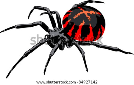 Vector Isolated Spider