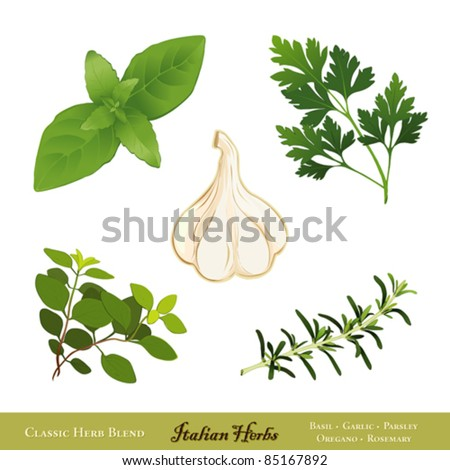vector - Italian Herbs. Traditional spices for cooking: Sweet Basil, Garlic, Italian Flat Leaf Parsley, Italian Oregano, Rosemary, isolated on white. EPS8 compatible.