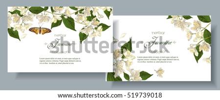 vector jasmine flower banners