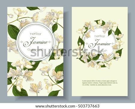 vector jasmine flowers banner