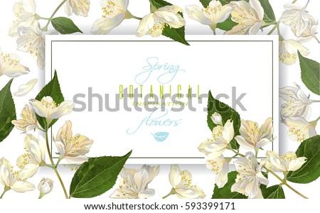 vector jasmine flowers