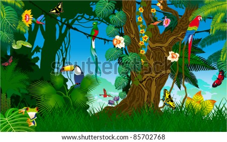 Vector Jungle with Frog, Toucan, quetzal, humming-birds, butterflies , Ara and Green Snake