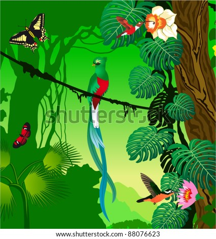 Vector Jungle with quetzal, humming-birds and butterflies - stock vector
