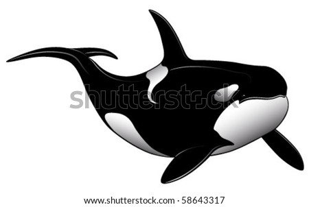 stock vector : Vector Killer whale represented in the form of a tattoo.