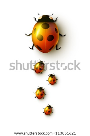 vector ladybug family