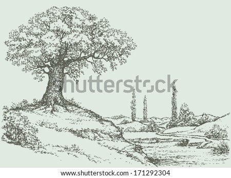 vector landscape mighty oak