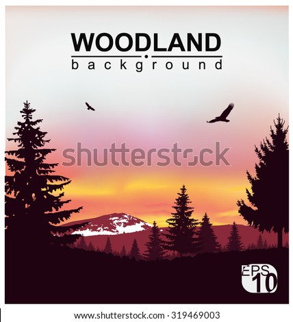 Vector landscape. Silhouette of coniferous trees on the background of snowy mountains and colorful sky. Sunset. Flying eagles. Eps 10.