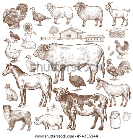 vector large set  farm theme....