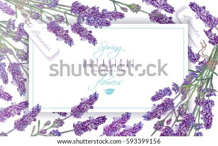 vector lavender flowers banner