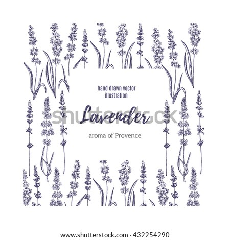 Vector lavender hand drawn illustration.Hand drawn lavender frame.Healing and cosmetics herb.Medical plant. Great for traditional medicine design. Great design for natural and organic products. #432254290